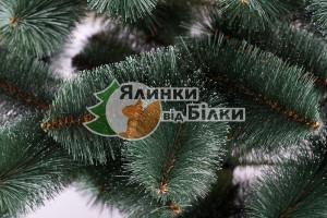 Сосна зелена з білими кінчиками