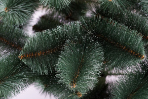 Сосна зелена з білими кінчиками 1.80 м.